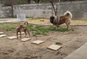 Perro gigante jugando con perro grande
